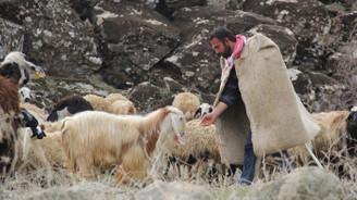 Çobana sigorta primi desteği önerisi