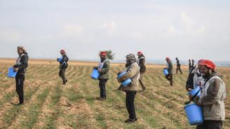 Gazze sınır şeridinde 12 yıl aradan sonra ekim