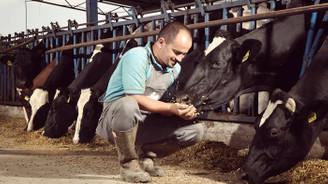 Hayvancılıkta modernizasyon yatırımına yüzde 50 hibe