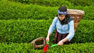 ABD'ye çay ihracatı artacak