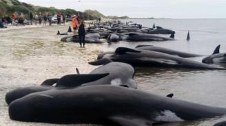 Karaya vuran 145 balina telef oldu