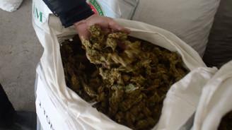 İpsala Sınır Kapısı'nda 1,5 ton esrar yakalandı