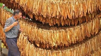 Tütünde üretim ve ihracat düşerken ithalat artıyor