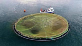 Karadeniz somonu Japon 'suşi'si oldu
