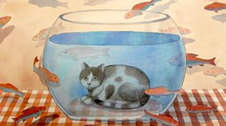Gürbüz Doğan'ın kedileri Antalya'da…