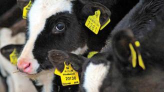 Fakıbaba: Hayvancılıkla ilgili önümüze bakmamız gerekir