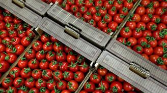 Rusya domates ihracatında firma sayısını mecburen artırdı