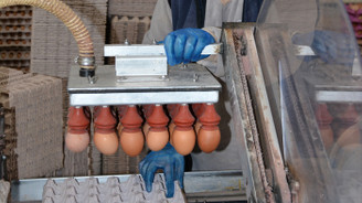 Balıkesir'de saniyede bir koli yumurta üretiliyor