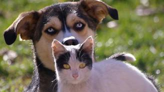 Kedi ve köpeklere mikroçipli kimlik