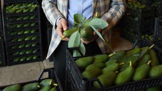 Don olayı ve yoğun talep avokado fiyatını yükseltti