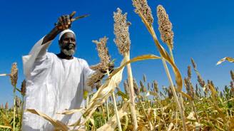 Türkiye ve Sudan'dan tarımsal alanda iş birliği