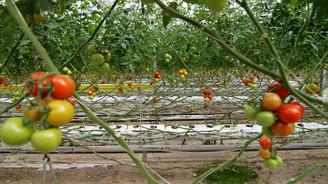 Hindistan cevizi kabuğunda üretilen domatese yoğun talep