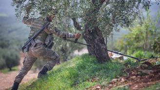 Afrin'de hayat normalleşiyor