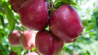 Karaman'da elma üretimi ihracat odaklı büyüyor
