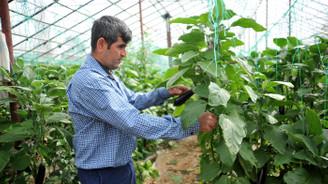 Yağışlar Batı Akdeniz çiftçisini sevindirdi