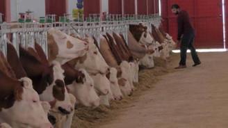 2 milyonluk destek ile modern süt üretim tesisi açtı