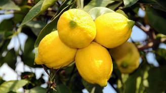Limon tarlada 1 pazarda 5 lira