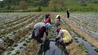 Islah edilen 'çöplük'te 40 çeşit meyve sebze yetiştiriliyor