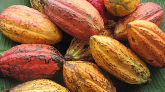 Kakaoya fonların ilgisi arttı, fiyatlar yüzde 45 yükseldi
