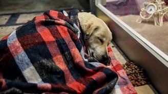 Evcil hayvanlar için yapılan harcamalar ayda 500 lirayı buluyor