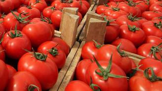Rusya'dan 5 şirkete daha domates ithalatı izni
