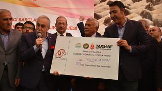 300 koyun projesi Şırnak'ta başladı