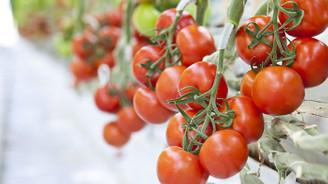 Rusya, Türkiye'den domates ithalatını genişletmeye hazır