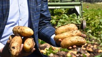 Erkenci patates çiftçiyi sevindirdi