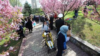 Sakura çiçeklerinin altında anıldılar