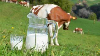 Çiğ süt primine seçim zammı
