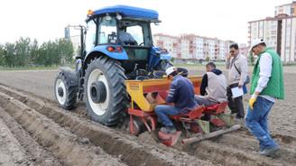 Yerli patates tohumu ıslah çalışmaları