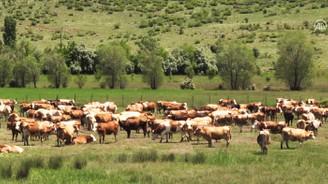 SÜTAŞ yatırımı Doğu'da hayvancılığı canlandıracak