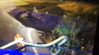 Seyir halindeki TIR'ın sileceğine yılan dolandı