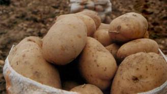 Patatesin merkezinde Y virüsü çalıştayı