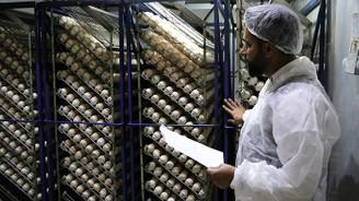 Genç girişimci ekmeğini hindi palazından kazanıyor