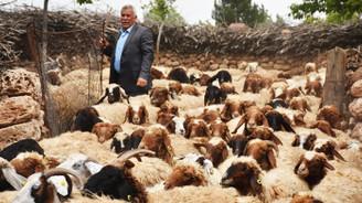 '300 koyun projesi' besiciye can suyu oldu