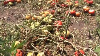 TZOB: Doğal afet yaşayan çiftçinin borçları ertelenmeli