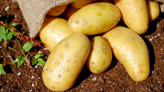 Patatesi 1.95 liradan piyasaya sürdü