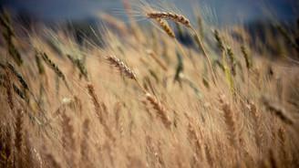 Yeni dönemde tarım ve hayvancılığı ne bekliyor?