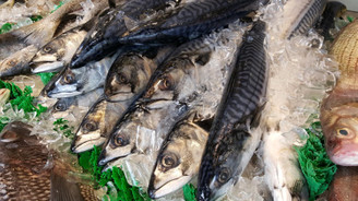 Balık sektörü endüstri 4.0 ile dönüşüyor