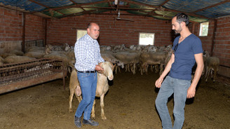 Et açığı tescilli Eşme koyunuyla azaltılacak