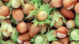 Fındık üreticisine hasat uyarısı
