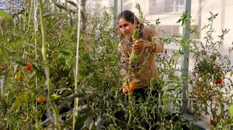 Paris'in çatılarında kentsel tarıma ilgi artıyor