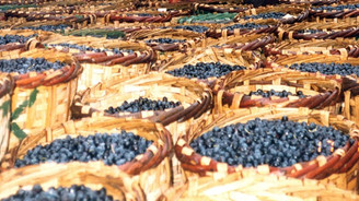 Marmarabirlik'te ürün alımı sona erdi