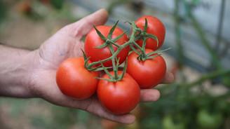 Rusya'nın Türkiye'den domates kotası 100 bin tona çıktı