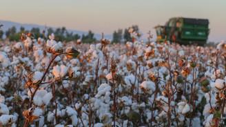 Pamuk üreticileri prim desteğinin artırılmasını istiyor