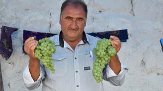 Üzüm üreticileri devlet desteği ve entegre tesis istiyor