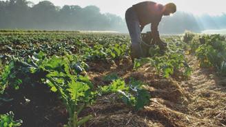 Bitkisel üretimde artış bekleniyor