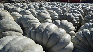 İyi Tarım Uygulaması kabak üretimini yüzde 50 artırdı