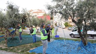Zeytin Dalı Projesi'ne kayıtlı ailelere ulaştırılacak